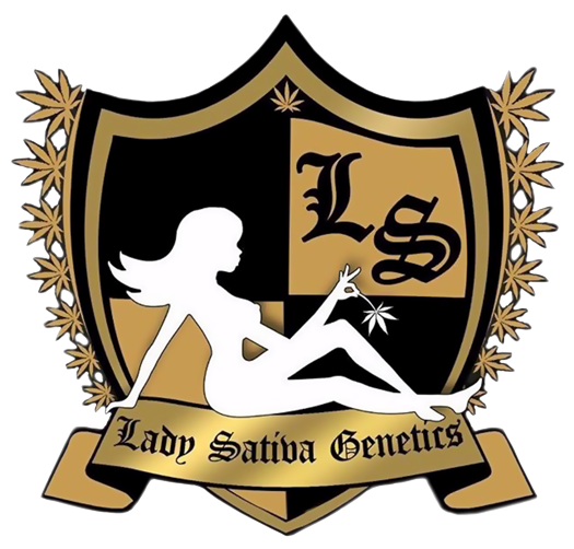 Lady Sativa Genetics