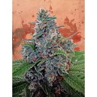 Ministry of Cannabis - Auto Blue Amnesia (Feminized)