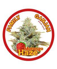 Family Ganjah Seeds - Morango Haze (Fem)