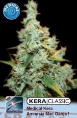 Kera Seeds - Medical AMG Haze (Fem)