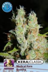 Kera Seeds - Medical Buddha (Fem)