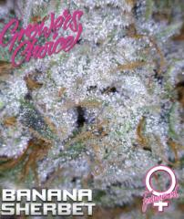Growers Choice - Banana Sherbet (Feminized)