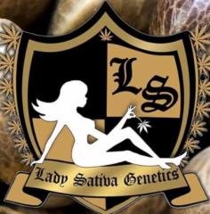 Lady Sativa Genetics - ODV Sour (Regular)