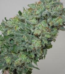 Mandala Seeds - Flashberry (Regular)
