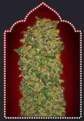 00 Seeds - Chocolate Kush (Feminized)