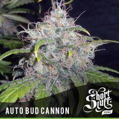 Short Stuff - Auto Bud Cannon (5 Fem)