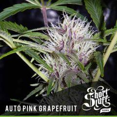Short Stuff - Auto Pink Grapefruit (5 Fem)