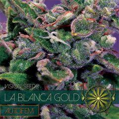 Vision Seeds - La Blanca Gold Auto (Fem)