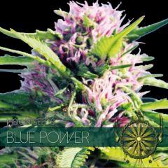 Vision Seeds - Blue Power (Fem)