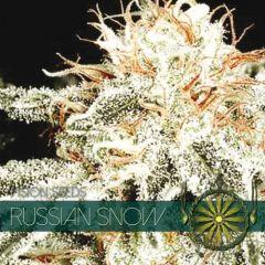 Vision Seeds - Russian Snow (Fem)